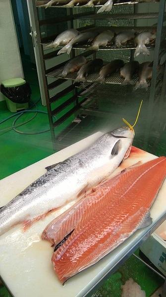 désarêtage du saumon